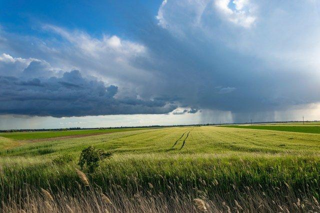 Stormcornfieldclouds